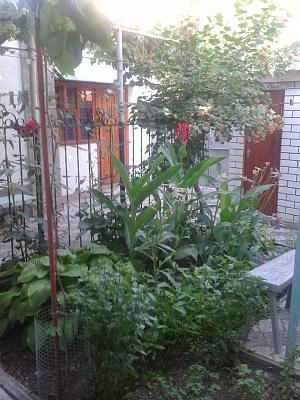 Дом  посуточно в Феодосии. ул. Шевченко, 78. Фото 1