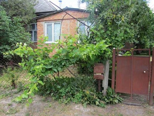 Дом  посуточно в Миргороде. ул. Береговая, 49. Фото 1