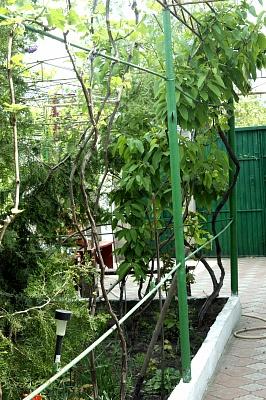 1-комнатная квартира посуточно в Одессе. Суворовский район, Николаевская дорога, 277. Фото 1